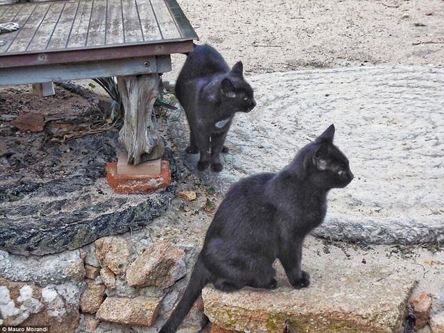 Ông Mauro bắt đầu ngày mới bằng việc dậy sớm để ngắm mặt trời mọc và cho mèo ăn.
