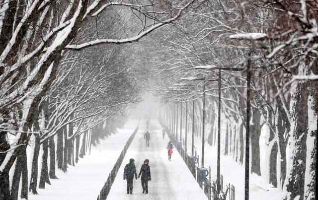 Hơn 4.000 chuyến bay đến và rời Mỹ đã bị hủy và chính quyền liên bang Mỹ phải đóng cửa làm việc trong một ngày do thời tiết diễn biến xấu. Trong ảnh: Tuyết phủ trắng cây cối ở Washington.