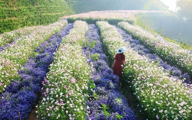 Cánh đồng hoa mới toanh ở Đà Lạt đẹp 'ngất ngây' đốn tim giới trẻ - 3