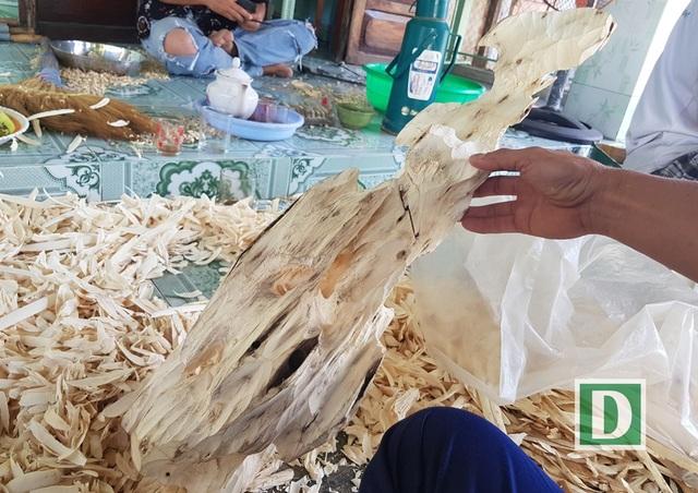 Một đoạn cây dó bầu được phát hiện có đoạn trầm hương kéo dài, quý hiếm