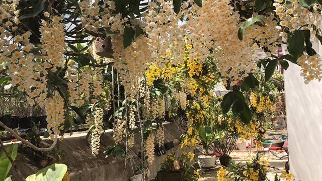 Một góc vườn lan rừng trên sân thượng của anh Nguyễn Anh Sơn