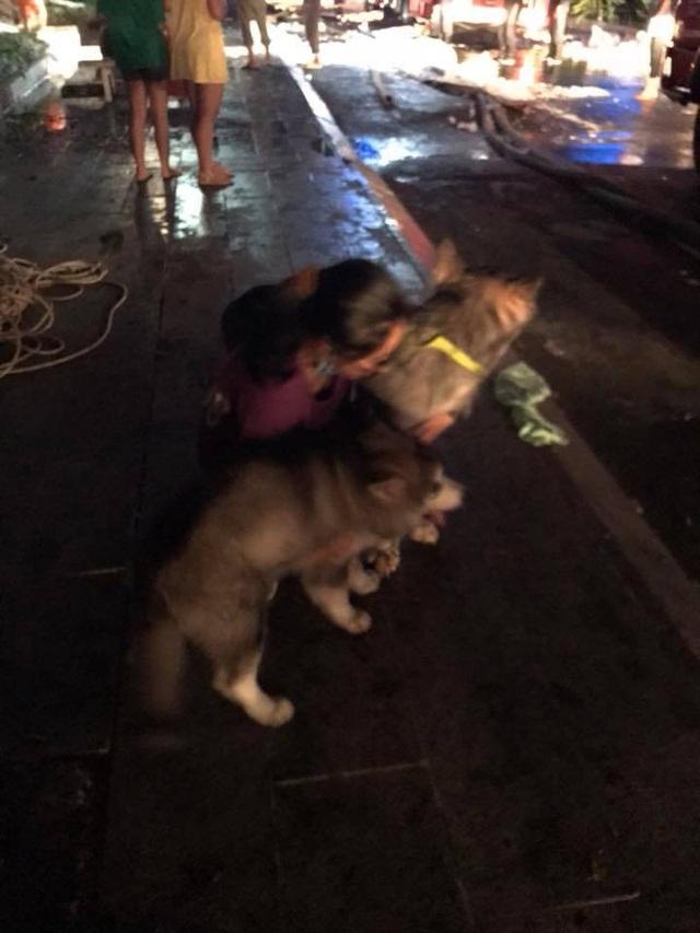 Một cô gái may mắn thoát nạn cùng 2 chú chó cưng của mình sợ hãi không đứng dậy nổi