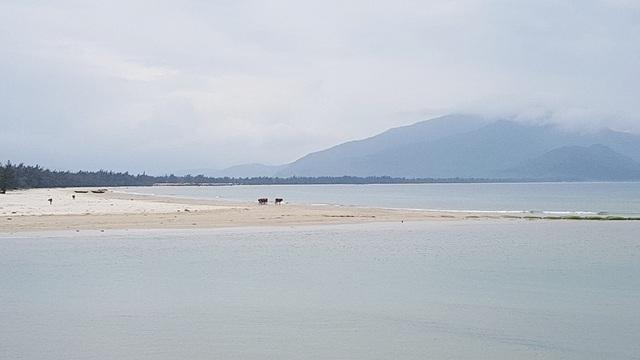 Một doi cát của cửa biển Lạch Giang kéo dài nơi trâu bò đứng ngắm cảnh