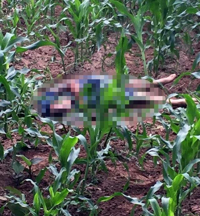 Thi thể nam thanh niên được phát hiện ở bãi ngô. (Ảnh: CTV)