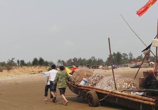 Những ngày qua, cứ vào mỗi buổi sáng sớm, những chiếc bè mảng của bà con ngư dân ven biển huyện Hoằng Hóa đã hồ hởi ra khơi. Đến khoảng 8h, dọc vùng biển xã Hoằng Thanh, Hoằng Trường...lại rộn ràng, tấp nập bởi những chiếc bè mảng trở về bờ mang theo đầy cá.