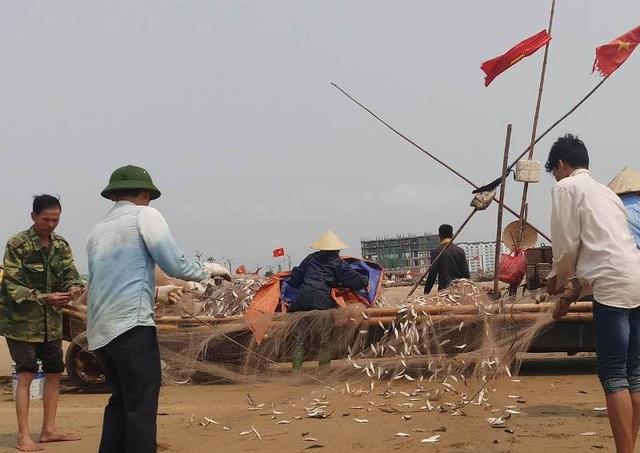 Cá trích rất dễ đánh bắt nhưng vất vả nhất vẫn là khâu gỡ cá. Những ngày đánh bắt được nhiều cá, bà con phải huy động hết thành viên trong gia đình, thậm chí mượn thêm người để cùng nhau gỡ lưới cho kịp bán và tiếp tục ra khơi.