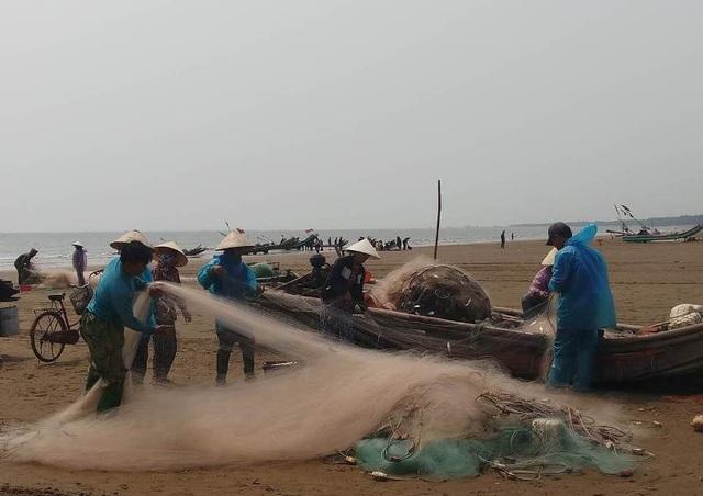 Cá trích là loại hải sản được các cơ sở chế biến thu mua để làm nguyên liệu sản xuất nước mắm, nên cá về đến đâu, được tư thương chờ để bốc hàng đến đó. Với giá cá từ 15.000 - 18.000 đồng/kg, bình quân mỗi ngày sau khi trừ các khoản chi phí, ngư dân vùng biển cũng cho thu nhập từ 2-3 triệu đồng.