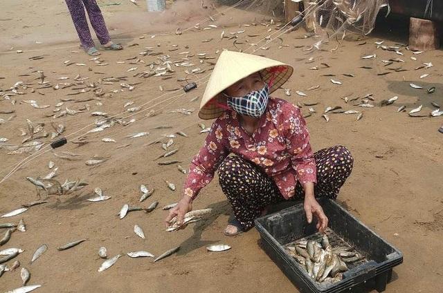 Năm nay, không chỉ được mùa cá trích mà việc tiêu thụ cũng thuận lợi nên cá về gỡ lưới ra đến đâu, có người thu mua đến đó, tạo không khí phấn khởi cho bà con ngư dân.