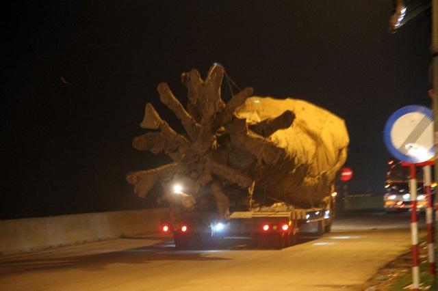 Vào lúc 20h tối qua, tài xế và người dân lưu thông trên Quốc lộ 1A địa phận tỉnh Hà Tĩnh không khỏi giật mình trước chiếc xe đầu kéo (rơ moóc phía sau mang BKS 73R-00338) chở 1 cây gỗ siêu khủng còn nguyên bầu lớn, phần ngọn được cắt trừ những cành lớn, chạy băng băng, hướng ra phía Bắc.