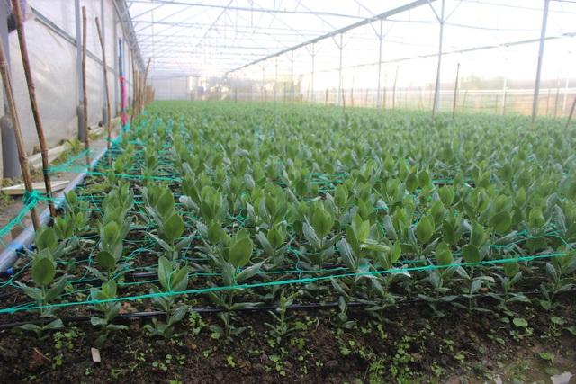 Một góc vườn hoa do thầy cô và học trò trường PTDT nội trú tỉnh Lâm Đồng trồng.