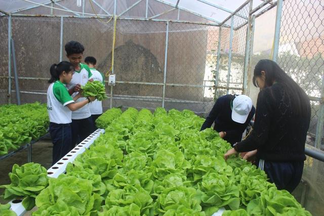 Mô hình vườn rau, hoa của trường PTDT nội trú tỉnh Lâm Đồng giúp các em học sinh được thực hành thực tế sau mỗi giờ lên lớp