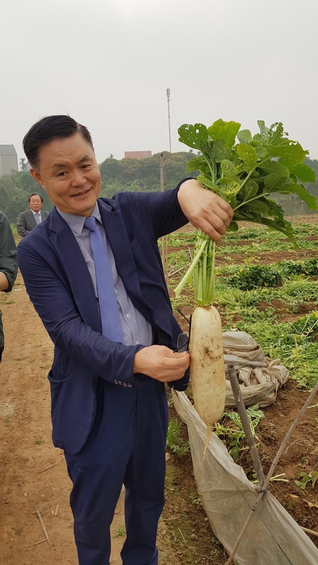 Cú bắt tay giữa hai doanh nghiệp Việt – Nam biến củ cải ế thừa thành mũi nhọn xuất khẩu - 1