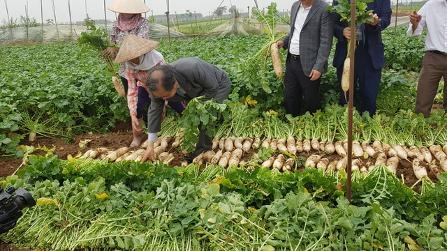 Cú bắt tay giữa hai doanh nghiệp Việt – Nam biến củ cải ế thừa thành mũi nhọn xuất khẩu - 3