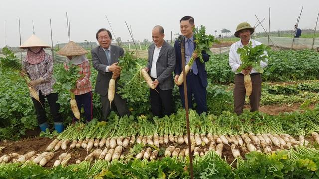 Cú bắt tay giữa hai doanh nghiệp Việt – Nam biến củ cải ế thừa thành mũi nhọn xuất khẩu - 4