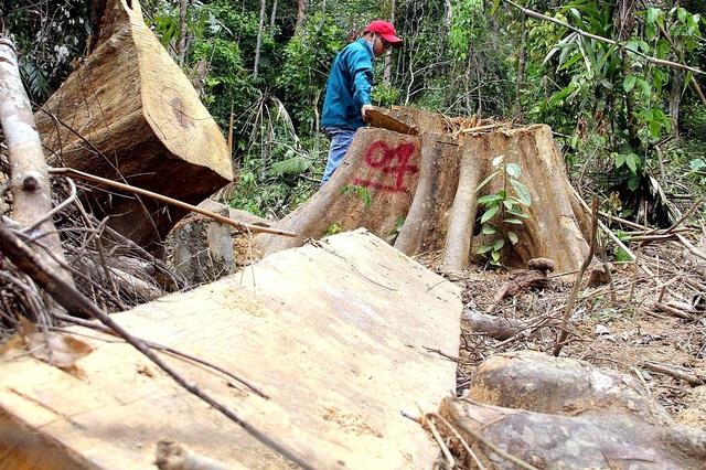 Hiện trường vụ phá rừng phòng hộ ở Đông Giang