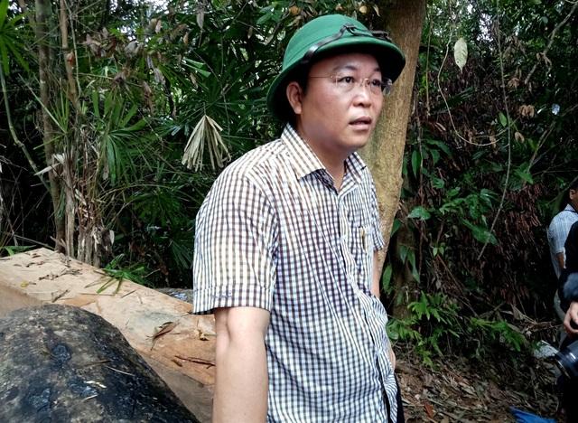 Ông Lê Trí Thanh - Phó Chủ tịch tỉnh Quảng Nam thị sát khu rừng bị hạ sát ngày 30/3