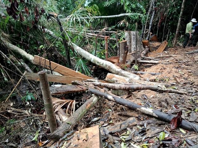 Hiện trường phá rừng phòng hộ ở huyện Đông Giang