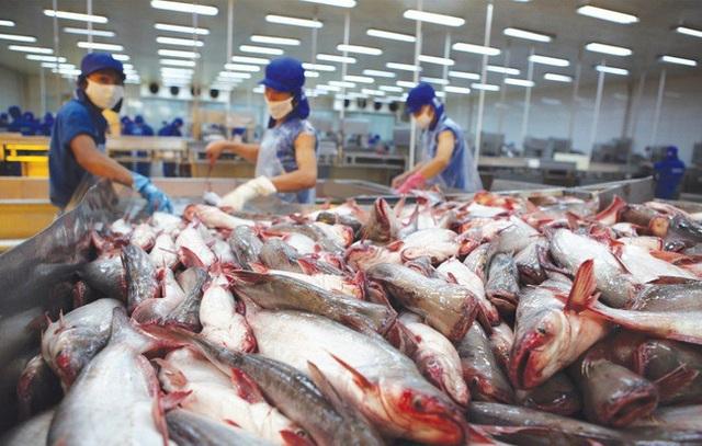 Nguy cơ cá tra mất thương hiệu vì xuất tiểu ngạch sang Trung Quốc - 1