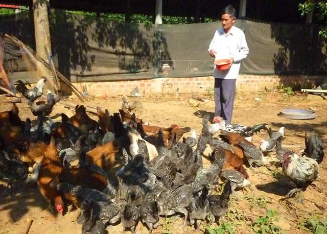 Ông Ba Thành với đàn gà nhiều chủng giống khác nhau.
