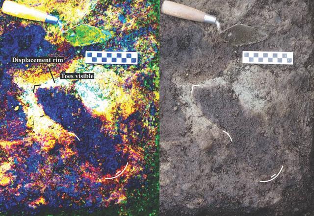Có 29 dấu chân tại địa điểm này, dù các nhà khoa học nghi ngờ còn nhiều dấu chân khác được giữ nguyên ở nơi khác - Ảnh McLaren et al. 2018.