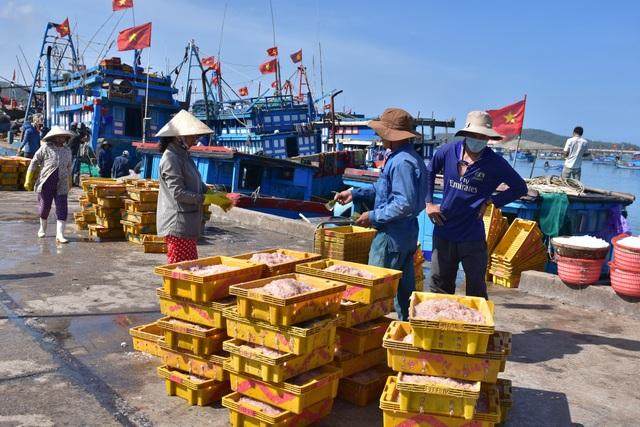 Mỗi tàu đánh bắt được 1,5 - 2 tấn ruốc tươi và được thương lái thu mua hết ngay khi cập bến với giá 20.000 đồng/kg