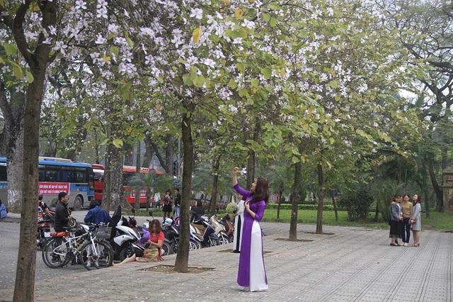 Bạn trẻ Thủ đô thích thú tạo dáng bên sắc tím hoa ban - 9