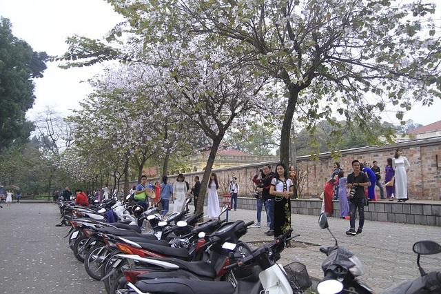 Ngay từ sáng sớm, đường Bắc Sơn đã nô nức người đến chụp ảnh, xe được xếp gọn gàng để nhường không gian cho các mẫu ảnh thả dáng.