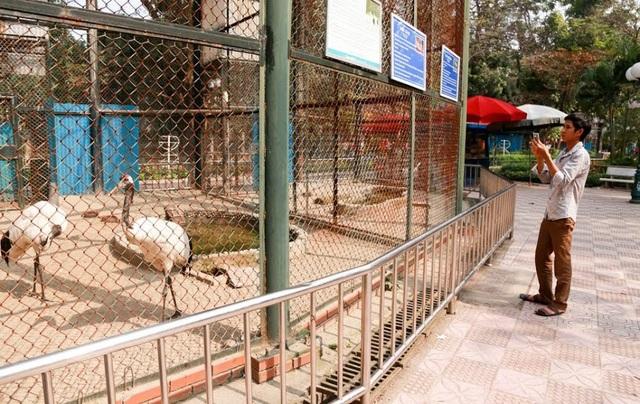 Nhiều du khách thích thú chụp ảnh đôi sếu đầu đỏ quý hiếm khi đến tham quan vườn thú.