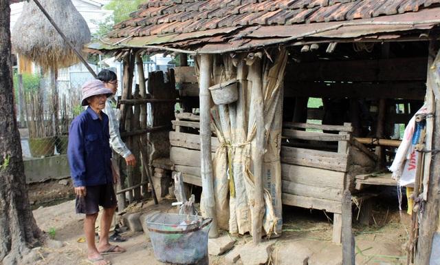 Ở tuổi 84, hộ ông Trương Hiền vẫn cố gắng nuôi 2 con bò, và chúng đều phát bệnh, đây là số tài sản để 2 vợ chồng ông dưỡng già