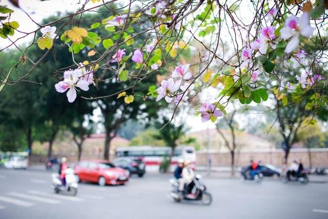 Hoa ban được xem là một những biểu tượng của núi rừng Tây Bắc và gắn bó mật thiết trong đời sống của người dân nơi đây, đặc biệt là người dân tộc Thái – Tày. Vào mùa xuân, bà con dân tộc nơi đây lại thường tổ chức lễ hội hoa ban, thu hút đông đảo khách du lịch từ khắp mọi nơi.