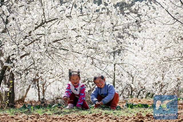 Mãn nhãn mùa hoa xuân tuyệt đẹp ở Trung Quốc - 1