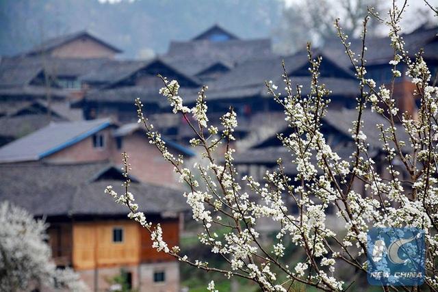 Mãn nhãn mùa hoa xuân tuyệt đẹp ở Trung Quốc - 4