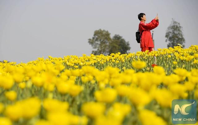 Mãn nhãn mùa hoa xuân tuyệt đẹp ở Trung Quốc - 6