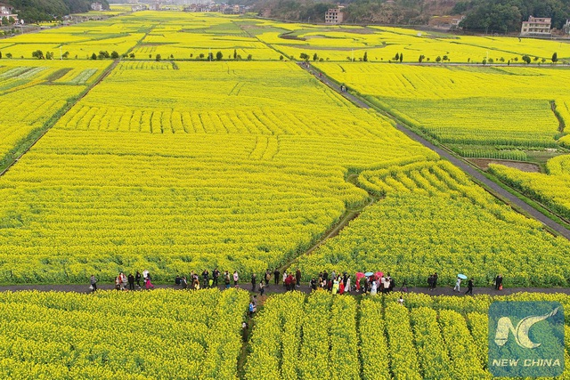 Mãn nhãn mùa hoa xuân tuyệt đẹp ở Trung Quốc - 7