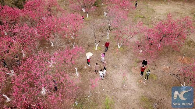 Mãn nhãn mùa hoa xuân tuyệt đẹp ở Trung Quốc - 8