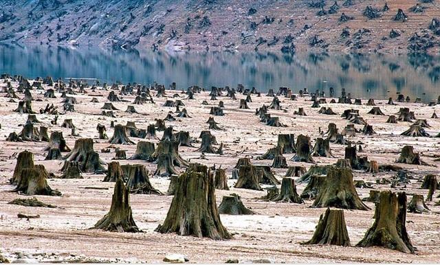 Hàng trăm gốc cây bị đốn hạ không thương tiếc, để lại một mảnh đất trơ trọi.