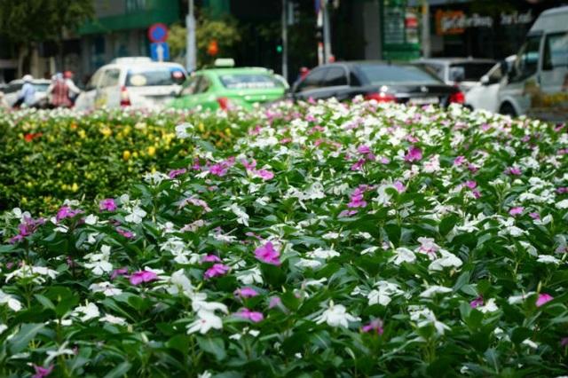 Ông Đoàn Ngọc Hải từng chia sẻ, việc sử dụng vị trí Công trường Lam Sơn để xây dựng công viên là nhằm tạo cảnh quan cho khu vực trung tâm, đúng với quy hoạch mà TPHCM đã phê duyệt.