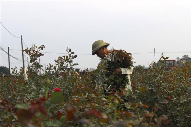 Làng hoa Tây Tựu trầm lắng dù cận ngày Quốc tế Phụ nữ 8.3 - 1