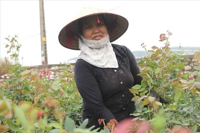 Làng hoa Tây Tựu trầm lắng dù cận ngày Quốc tế Phụ nữ 8.3 - 4