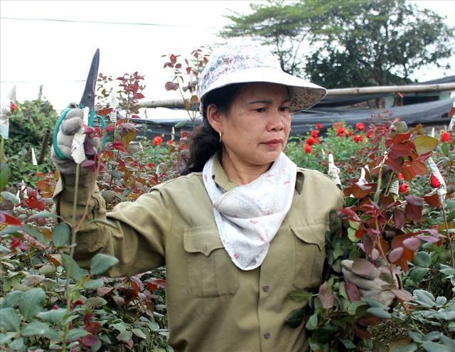 Làng hoa Tây Tựu trầm lắng dù cận ngày Quốc tế Phụ nữ 8.3 - 7