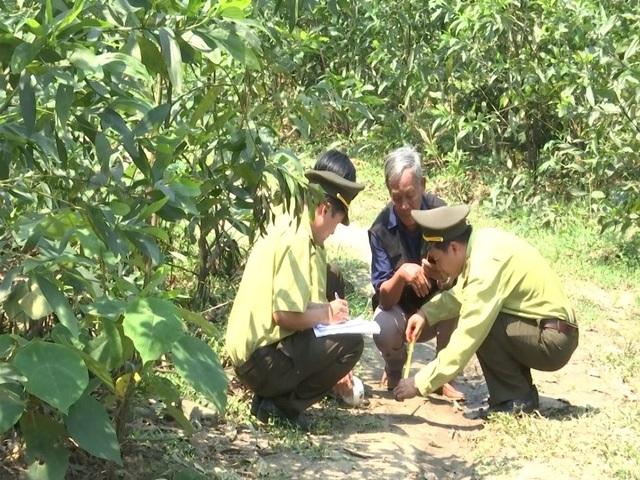 Lực lượng chức năng kiểm tra hiện trường nơi xuất hiện thú rừng