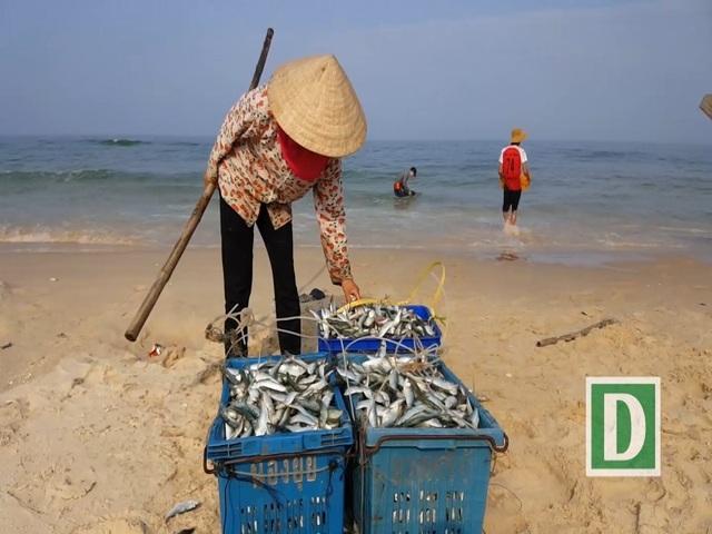 Có hộ ngư dân thu nhập hơn 1 tấn cá trích/chuyến biển