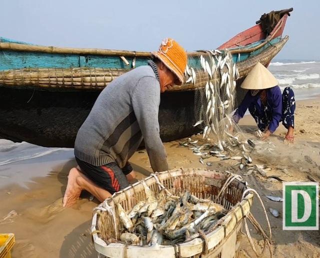 Ngư dân vùng bãi ngang Quảng Trị bội thu cá trích