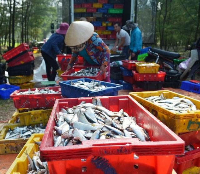 Các thương lái thu mua hải sản cho ngư dân ngay tại bãi biển