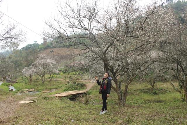 Thời điểm này đã có rất nhiều khách du lịch lên Mộc Châu để chiêm ngưỡng vẻ đẹp của những cánh rừng hoa mơ