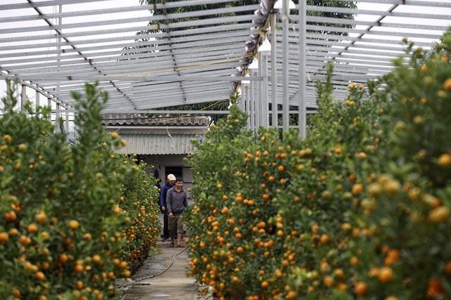 Trung bình khung giàn cũng tốn hàng chục triệu đồng. Nếu đất rộng, hệ thống này có thể tiêu tốn cả trăm triệu đồng của chủ vườn.