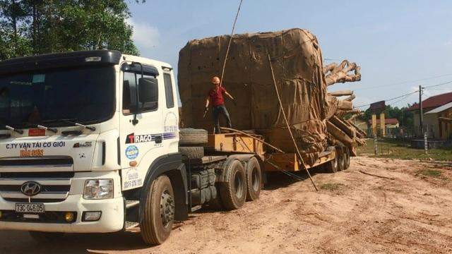 Công ty Hải Sơn và người tự xưng là chủ khối lâm sản 3 cây quái thú đang được Công an tỉnh Thừa Thiên Huế mời làm việc để phục vụ cho công tác điều tra