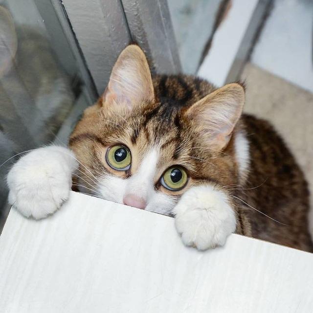 """Chú mèo tật nguyền đốn tim cư dân mạng bằng """"50 sắc thái"""" cực kỳ đáng yêu - 2"""