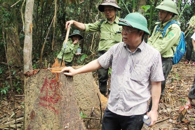 Ông Lê Trí Thanh thị sát tại khu rừng phòng hộ Sông Kông (huyện Đông Giang) bị hạ sát