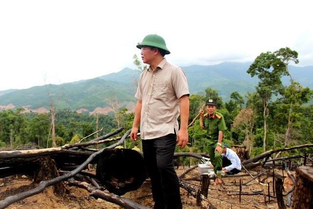 Ông Lê Trí Thanh thị sát rừng phòng hộ ở xã Tiên Lãnh, huyện Tiên Phước bị cưa sạch, đốt sạch được phát hiện vào năm 2017